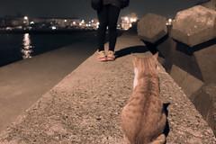 20151226-IMG_0252 (HS.Lee()) Tags: sea night cat canon girlfriend waves play seawall l    24105   fishingport     60d