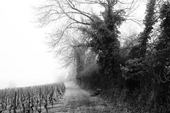 Grosses Moos (m.a.r.c.i) Tags: nature landscape schweiz switzerland vineyard suisse swiss fujifilm monochrom fujinon marci moos ins weinberg murten seeland rebberg murtensee xe1 vully anet grossesmoos xf18mmf2