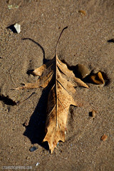 Leaf (Vicr of Flickr) Tags: charity people usa chicago news cold ice beach sports broadcast water station night swimming us tv illinois sand support warm frost hole dive freezing slush tent lakemichigan il special soil event help aid assist freeze blackhawks donation olympics icy evanston frigid sheridan 24hour fundraiser televised sponsor specialolympics overnight donate plunge northwesternuniversity torchrun polarplunge challenged retardation funding soill clarkstreetbeach freezinforareason httptangtechphotocom