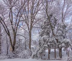 DSC01604-2 (johnjmurphyiii) Tags: winter usa snow connecticut shelly cromwell originaljpeg johnjmurphyiii 06416 sonycybershotdsch90