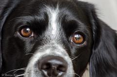 Dobby (rod_b_k) Tags: family portrait pets dogs la eyes paz gaze lapaz 500px ifttt