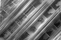 First Film (GJV27) Tags: analog kodak trix 400tx 365 pictureaday nikkormat ft3 365challenge