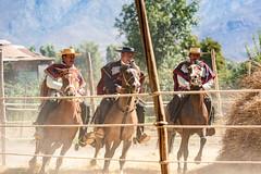 Trilla (Ricardo Martinez Fotografia) Tags: chile caballos nikon costumbres cultura trilla callelarga chilenidad d810 ricardomartinez