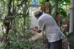 Butterfly bait traps (mansi-shah) Tags: butterfly rainforest farming coorg madikeri forestecology mansishah rainforestretreat jenniferpierce ceptsummerschool baitraps