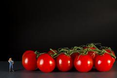 OGM... Euh... On n'aurait peut-tre pas d (Pierre-Francois VALCK) Tags: fruit rouge tomate ogm jardinier