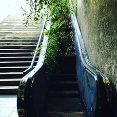 zweckentfremdet (Rosmarie Voegtli) Tags: green stairs munich mnchen bamboo bambi unusual grn 77 quirky bambus rolltreppe zweckentfremdet maximiliansforum instagram 116picturesin2016