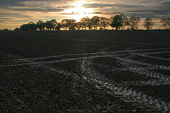IMG_3017_edited-1 (RichardTowers43) Tags: sunset fields wiltshire wilton kennetavon
