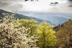 Trilogie_MG_0565 (hervv30140) Tags: trees sky white france nature yellow trois jaune landscape outside ciel paysage extrieur arbre blanc couleur languedoc gard aveyron lozre cvennes
