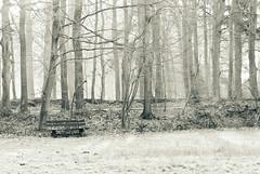50 shades of grey (frata60) Tags: morning trees bw netherlands monochrome bench landscape nikon zwartwit nederland bank highkey d200 bos drenthe ochtend landschap eelde vosbergen bankje 2885mm