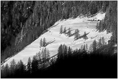 Un posto al sole - A sunny place (Matteo Bersani) Tags: sun house snow sunshine woods case neve sole stalla prato ayas bosco valdaosta a58 montagnamountain sonyalphaitalia naturanaturalmentenature bwbwbnblackwhitebianconero