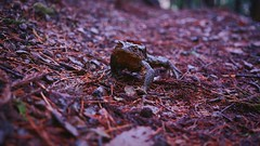 It's time to wake up (EyeEm teruw0) Tags: travel nature japan forest sony frog traveling wakeup japon giappone forestpath takingphotos forestwalk sonyalpha  naturecollection frommypointofview eyeem sonynex5r eyeembestshotsnature eyeembestedits eyeembestshots eyeemnaturelover sonylove