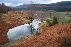 Dundreggan (oetrope) Tags: pool reflections scotland highlands pond conservation lochan glenmoriston dundreggan