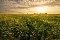 Sunset Mastenbroek (Rick Kloekke) Tags: sunset sun grass set landscape landscapes zonsondergang gras polder zwolle landschap mastenbroek sheerenbroek