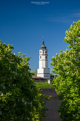 Hugged by Nature (Predrag Drobac) Tags: trees green tower clock nature spring hugging outdoor serbia belgrade fortress beograd srbija kalemegdan hugged
