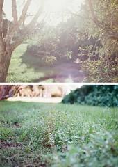 something of a dream (rebecaarh) Tags: film nature 35mm canonae1 agfavista400