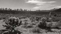 P.S.-16-357 (schmikeymikey1) Tags: trees bw plants mountain rock clouds landscape path style palmtree backlit