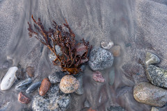 Sand (Trond-Arvid) Tags: seaweed water stone sand tang