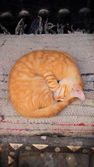 Sleeping Cat, Essaouira (nyoz_fr) Tags: travel mountains cat morroco maroc atlas