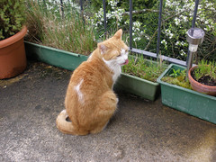 On the Balcony - Auf dem Balkon (ruthug08(on and off)) Tags: cat chat gato katze kot kedi
