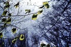 Spring (Japo Garca) Tags: naturaleza detalle primavera de hojas spring bosque campo verdes ramas brotes garca japo profundidad fotogrfa
