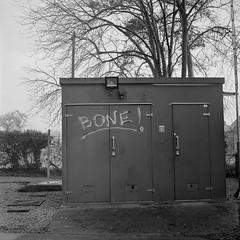 Bone! (tercrossman87) Tags: film home mat 124g push epson hp5 800 development ilford yashica 119 v550 lc29 ilfotec