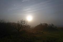Nature Reserve in Fog - 2016-0003_Web (berni.radke) Tags: fog nebel naturereserve ameland naturschutzgebiet hollum