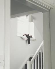 Cat on a windowsill (jasonalandewey) Tags: white cat windowsill vsco