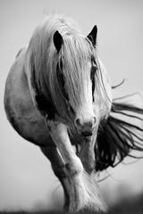 'Abigail' (Jonathan Casey) Tags: horse f2 vr 200mm vr1 d810