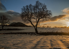sunset (Opera.Pink - d s g n) Tags: blue sunset sky orange sun mountain snow colour tree sol colors yellow clouds canon landscape atardecer rboles nieve paisaje cielo nubes rbol campo montaas montes paisajenevado
