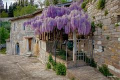 glicine (Luigi Alesi) Tags: italy landscape scenery san italia raw case severino fujifilm fiori marche paesaggio vie macerata glicine xm1 sanseverino