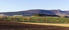 Bennachie Clear Morning Joiner (The Terry Eve Archive) Tags: mountain ngc granite tor moorland bennachie