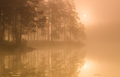 Golden morning (andreassofus) Tags: autumn trees sun sunlight mist lake fall nature water beautiful silhouette misty fog sunrise reflections landscape mirror golden sweden foggy vrmland goldenlight mistymorning holmedal tcksfors