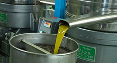 olio1 (Gioporc) Tags: olive puglia giovanni ulivi oro olio liquido molfetta porcelli oleificio gioporc