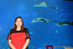 ocean restaurant 2015 (yipshot38) Tags: world ocean blue fish fine resort dinning sentosa 2015 reastaurant