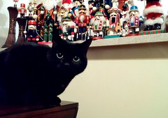Whiskers and her army of nutcrackers (music-lover88) Tags: christmas favorite cats cat feline nutcracker