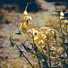 joshua tree national park. (PaperSt.SoapCo.) Tags: california flora desert joshuatree joshuatreenationalpark