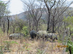 Zimbabwe (199) (Absolute Africa 17/09/2015 Overlanding Tour) Tags: africa2015