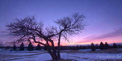 Angusglen_7 ( Ed Lee) Tags: winter sunset shadow snow color tree silhouette contrast landscape evening nikon 7100 angus outdoor branches glen tokina 1228