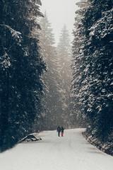 Day 315 (bstarzec) Tags: travel winter snow forest trek landscape woods outdoor snowy walk calm serenity calmness