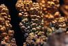 Copper (Ivan_p_) Tags: metal crystal chemistry copper dendrites