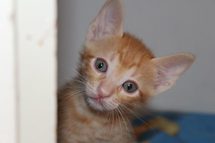 Baby cat. (Imene.Driche) Tags: new baby house beautiful look cat canon algeria eyes chat iso pro amateur somewhere bb flou regard profondeur canon1200d