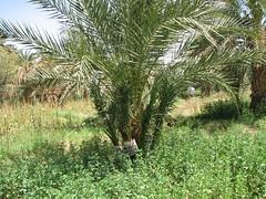 IMG_4199 (motazabdelazeem   ) Tags: sudan rivernile     northernsudan    alkarafab
