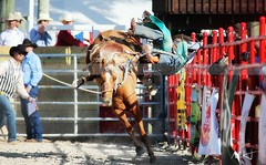 Homestead Professional Rodeo (Mario Houben   Photography) Tags: championship cowboy competition prca rodeo homestead southflorida sportsphotography actionphotography saddlebroncriding professionalrodeo harrisfield canoneos1dx mariohoubenphotography homesteadrodeoassociation docdemillyarera homesteadrodeochampionship