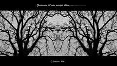 Zusammen...... (petra.foto on/off) Tags: collage spiegelung baum schwarz gespiegelt