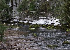 Sullivan Creek (lowellsimonsen) Tags: winter snow creek landscape cedars