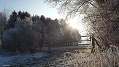 Feenwiese (chromaticographie) Tags: winter lumix natur wiese raureif sonnenschein lx7