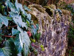 Anston Stones (Artybee) Tags: quarry northanston anstonstones