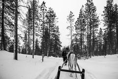 _DSC0256 (Alepan) Tags: finland finlandia lapponia circolopolareartico