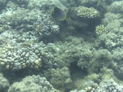 AGQ-20140423-0002 (AGQue) Tags: travel vacation fiji telephone cellphone april fj oceania 2014 underwaterphotography wetseason fji westerndivision iphoneography appleiphone4s gmt1200fijiislandsstandardtimezone