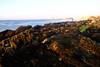 DSCF3310_web (0th) Tags: sunset sea beach evening hamriya